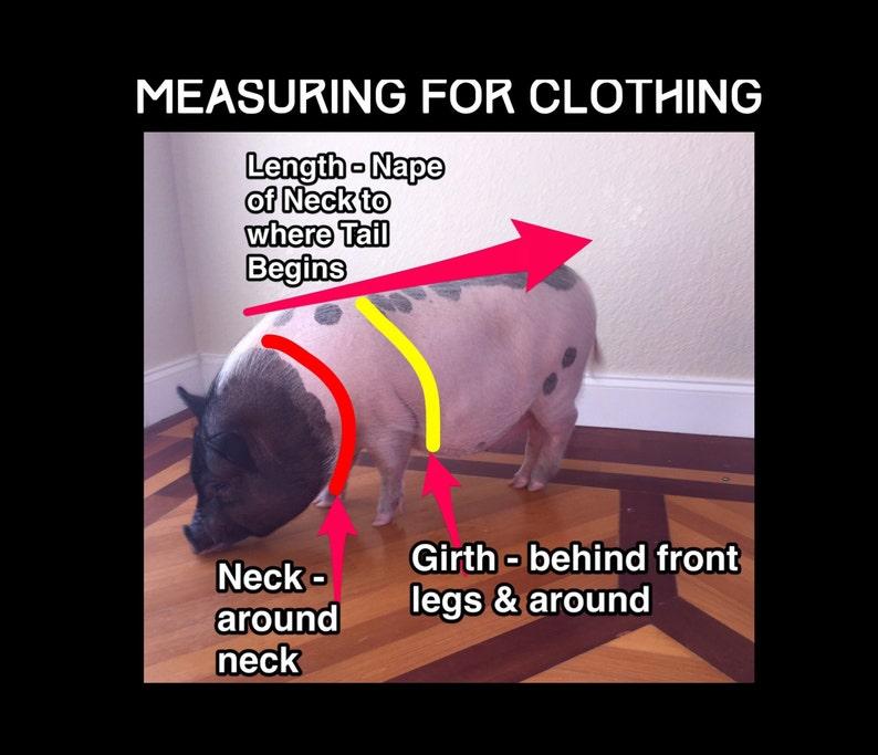 What Happens In Vegas Neck Tie Collar Set