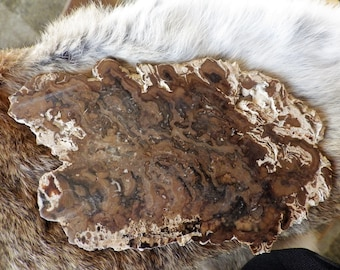 Raw Natural Brown Jasper/Chalcedony Slice - The Earth Stone  for grounding and protection