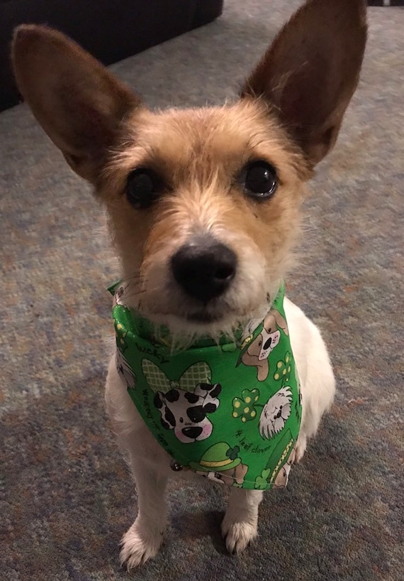 Image result for happy wednesday luck of the irish dogs