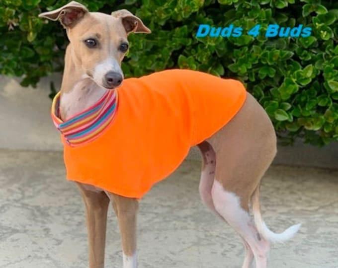 Italian Greyhound Clothing - Italy Greyhound - Iggy Clothing - Orange Sherbet Tee - Italian Greyhound Size