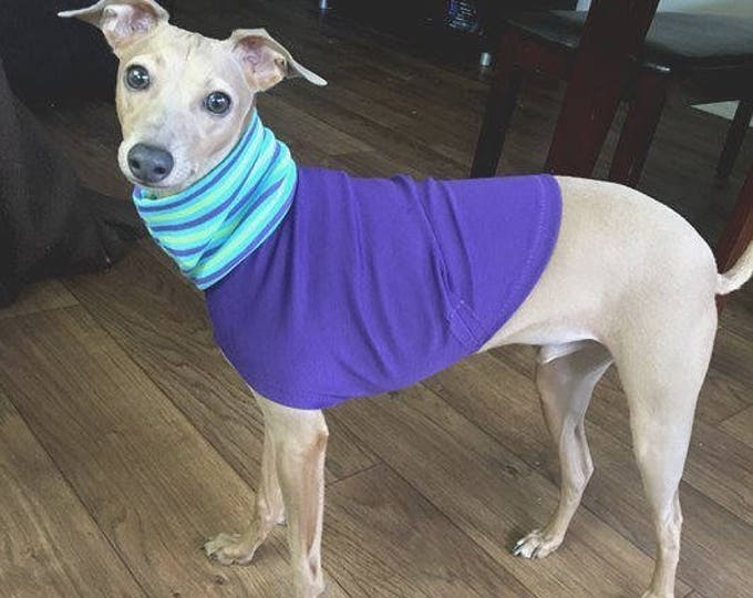 "Italian Greyhound Clothing. ""The Purple Tee"" - Italian Greyhound Sizes."