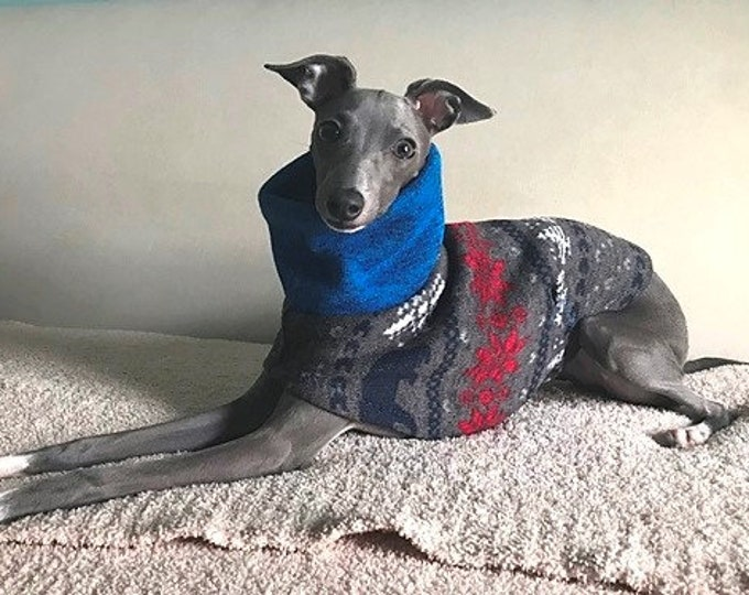 "Italian Greyhound Sweater. ""Blue Bear Sweater"" - Italian Greyhound Sizes"