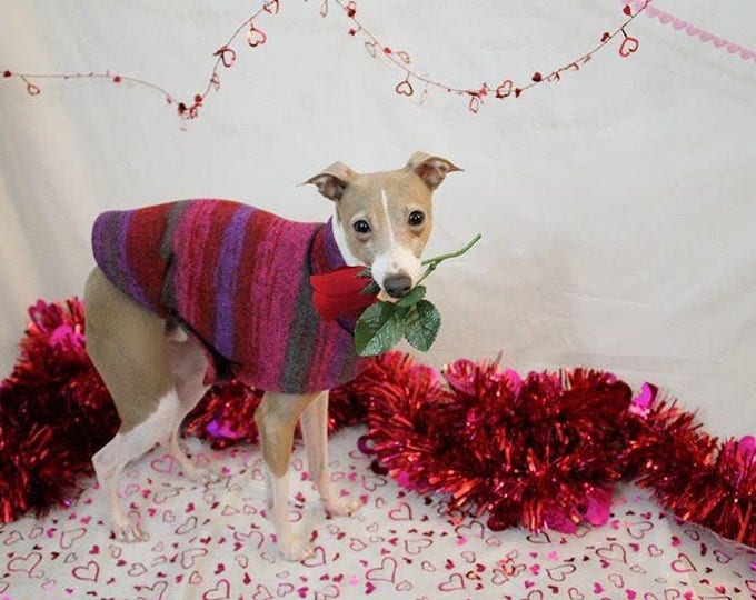 "Italian Greyhound Sweater. ""Red & Purple Tie Dye Sweater"" - Italian Greyhound sizes"