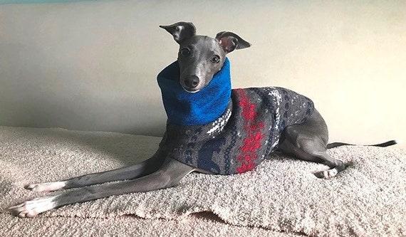 Italian Greyhound Clothing Blue Bear/'s Sweater Italian Greyhound Sweater Dog Apparel Dog Clothing Coat for dog. Dog Sweater