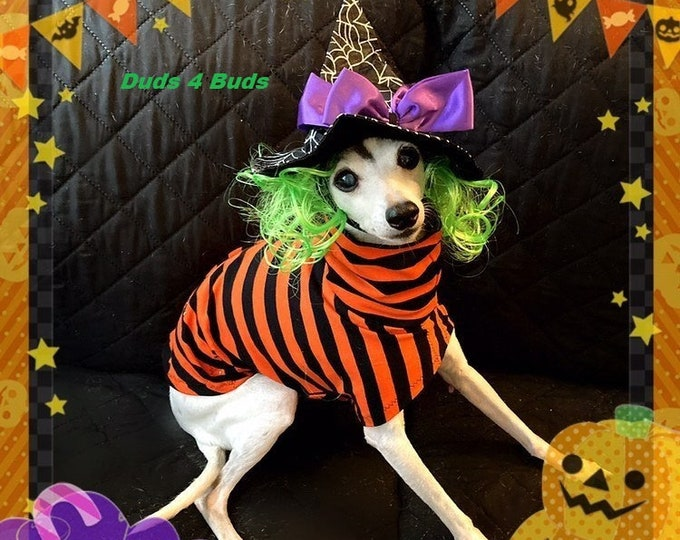 Italian Greyhound Clothing - Pet Halloween - Italy Greyhound - Iggy Clothing - Orange and Black Stripes Tee - Italian Greyhound Size