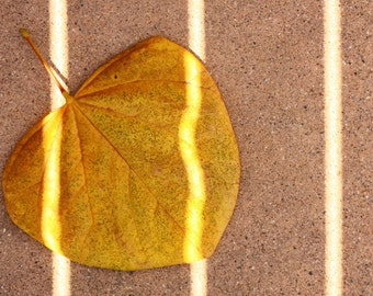 Yellow Leaf with shadows.