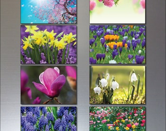 Spring flowering bulbs and blossom Fridge magnets set of 8