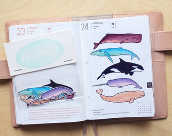 10 Transparent Whale Stickers - Suitable for Planning and Journaling - Narwhid, Blue Whale, Killer Whale, Beluga Whale, Sperm Whale