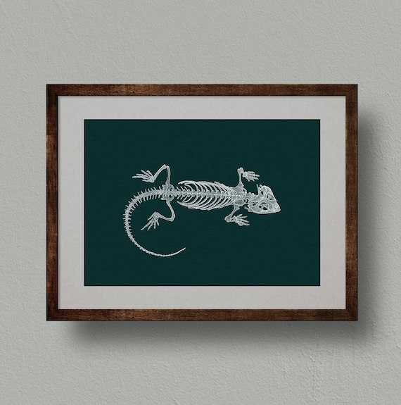 Bearded Dragon Skeleton Anatomy Print from Original Drawing.