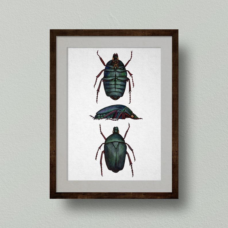 Rose Chafer Beetle Print from Original Watercolour Painting image 0