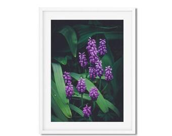 Digital download - photography flowers purple - springtime in Paris - wall decor