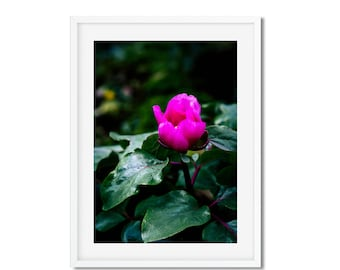 Digital download - photography of Nature and flowers pink - springtime in Paris - wall decor