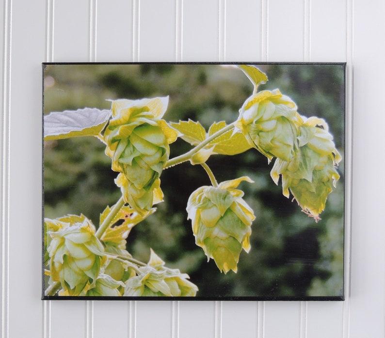 Hops vine  hops print  beer lover gifts  man cave decor  image 0