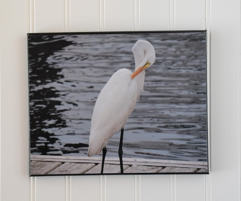 White heron photo  Beaufort NC  photo canvas  bird art  image 0