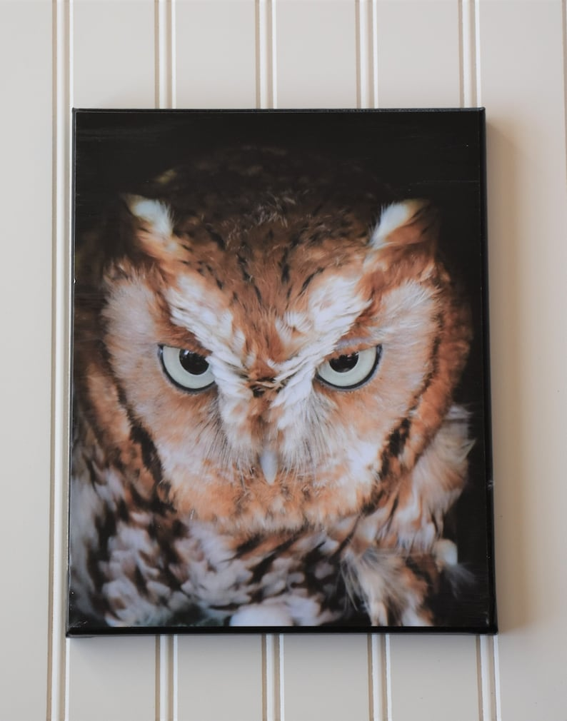 Owl decor  owl gifts  owl photo  owl print  gifts for owl image 0