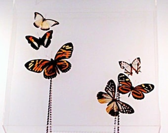 """6 Earth Toned Beauties Butterfly Display In a 13"""" x 13"""" x 2"""" Clear Acrylic Display"""