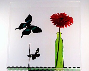 """Papilio blumei and Heliconius doris eratonius butterflies circle a pretty flower in a 13"""" x 13"""" x 2"""" acrylic display."""