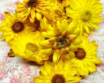 Homegrown Straw Flower - Xerochrysum bracteatum - Incense Supplies - Natural Herbs - Hand Harvested