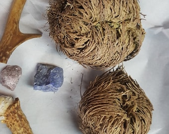 Rose of Jericho - Set of TWO - Resurrection Flower - Fern - Selaginella lepidophylla - Live plant bulb