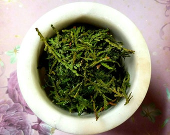 Homegrown Cedar Tips - (Thuja occidentalis) - Incense Supplies - Natural Sacred Herbs - Hand Harvested