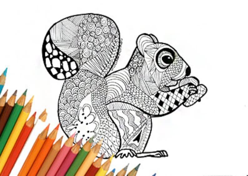 Scoiattolo Pagina Da Colorare Scoiattolo Disegno Da Colorare Etsy