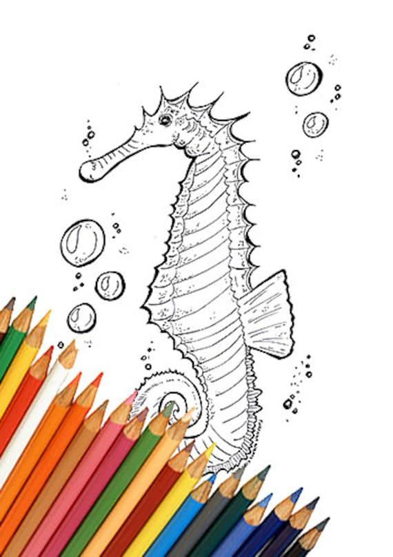 Coloriage à Imprimer Pour Enfants Et Adultes Hippocampe Etsy
