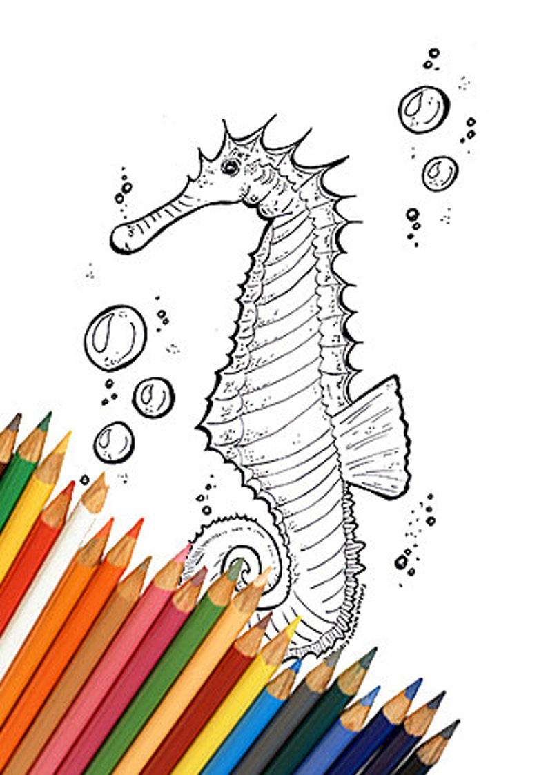 Disegno Da Colorare Stampare Per Bambini E Adulti Cavalluccio Etsy