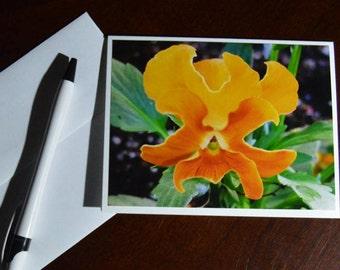 Photo Greeting Card, Bug loved Pansie