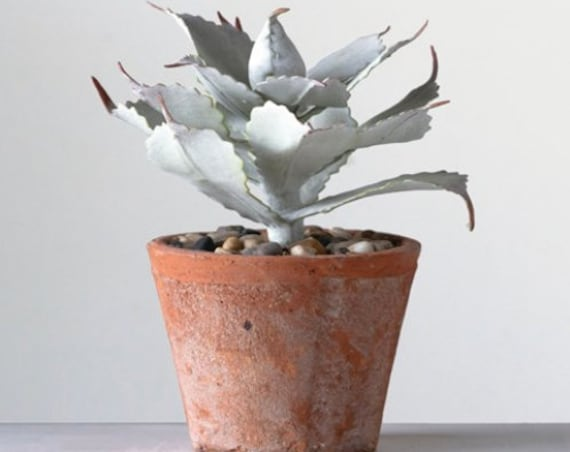 "Faux Succulent in Terra-cotta Color Cement Pot 8-1/2""H"