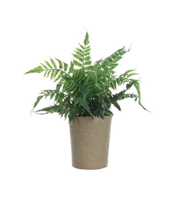 "Faux Fern in Paper Pot 13-1/2""H"