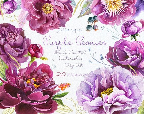 Watercolor peonies flowers clipart purple violet bordeauxs etsy image 0 mightylinksfo