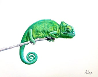 Chameleon colored pencil drawing ORIGINAL