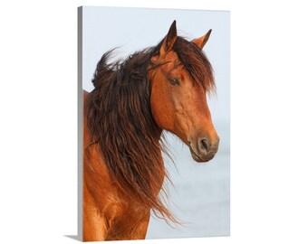 Canvas Print of Wild Horse Assateague Island Stallion Portrait on Beach Wall Decor - Wildlife Photography