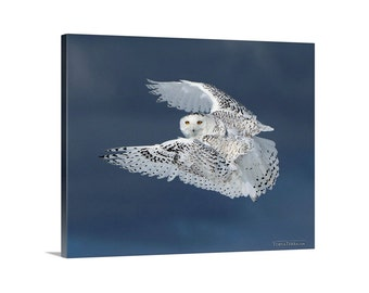 Canvas Print of Snowy Owl in Flight Canada Stormy Blue Sky Bird Flying Wings Open - Wildlife Photography