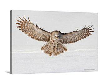 Great Grey Owl Flying Snowy Wonderland Winter Bird in Flight Canvas Print - Wildlife Photography