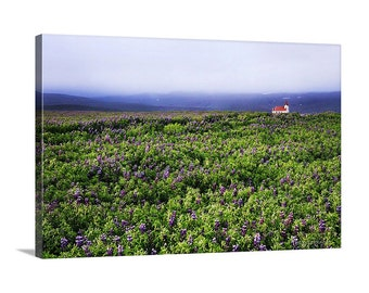 Canvas Print of Iceland Lupine Church Endless Wildflowers Foggy Summer Countryside Scenic - Landscape Photography