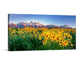 Canvas Print of Grand Tetons Wildflowers at Sunrise Spring Mountains Yellow Flowers Meadow Wide Panoramic - Landscape Photography