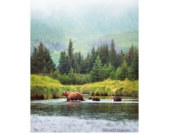 Paper Print - Wild Bear Family Crossing River in Alaskan Wilderness - Wildlife Photography