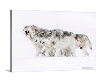 Canvas Print of Wolf Pack in Snow Whiteout Snowstorm Winter Wolves Family Group - Wildlife Photography
