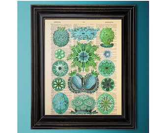 Ernst Haeckel, Ascidiae, Green Blue, Vintage Ocean Art Print, Dictionary Page, Book Art, Vintage Book Page, Recycled, Upcycled, Geek Décor