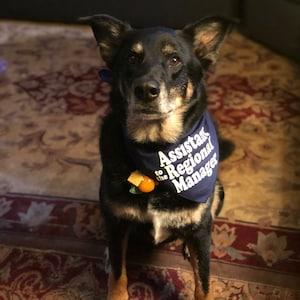 Bandana Tie On Pet Bandana Cute Office assistant manager Dog Bandana Dog Bandana