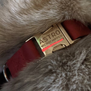 Gold leather dog collar, Personalized dog collar, Personalized leather dog collar, cat collar, leather cat collar, personalized collar photo