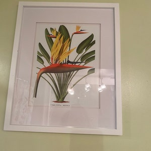 Russet Coviello added a photo of their purchase