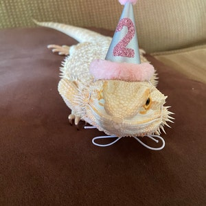 Rabbit Hat Bunny Hat Mini Baby Pink and Silver Birthday Hat Hedgehog Party Hat Guinea Pig Hat Ferret Party Hat Chicken Party Hat