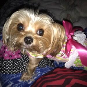 Dog Dress, Dog Clothing, Dog Wedding Dress, Pet Clothing, Dog Attire, Pet  Dress - Hot Pink with a Triple Layered Skirt