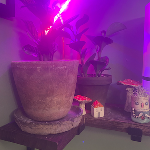 Marie Cuocco-Galebach added a photo of their purchase