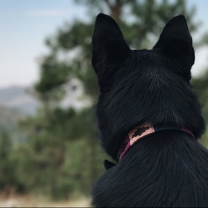 Cali Leather Dog Collar