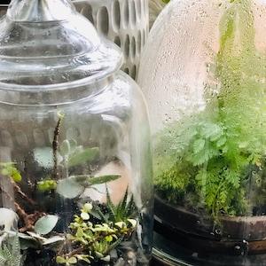 Terrarium Moss Frog Moss Live Moss For Terrariums And Etsy