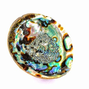 DISCOUNTED abalone shells smudge bowls colorful rainbow shells sage dish for saging huge abalone shell