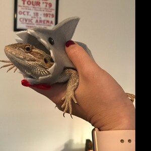 Shark Costume for Bearded Dragons and other Reptiles! Now in 3 sizes!!